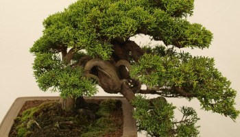 Cool How To Wire The Bonsai Here Are Some Useful Information Wiring Digital Resources Timewpwclawcorpcom