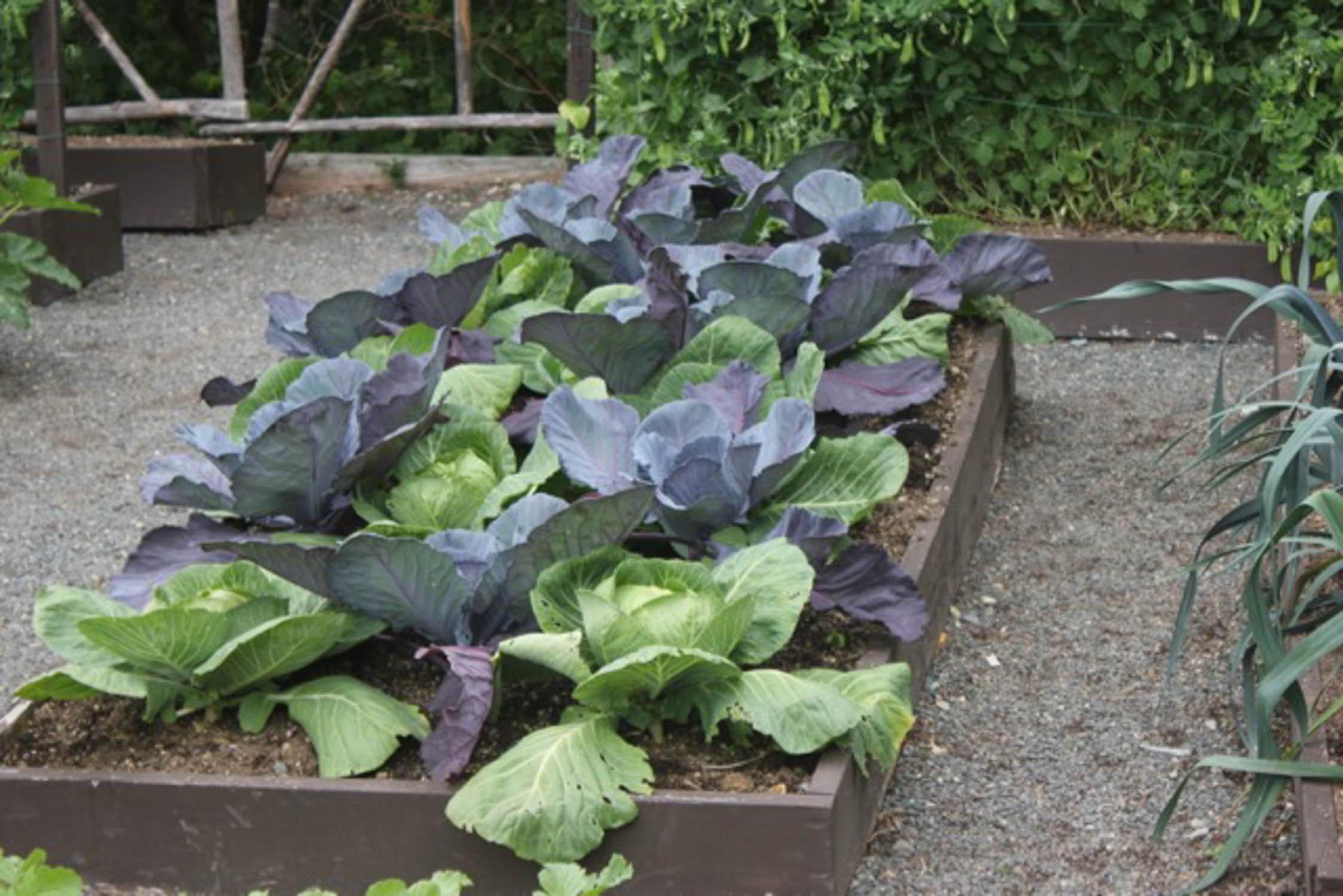 No-till vegetable gardening for home gardens - Gardening ... on Gardening  id=33979