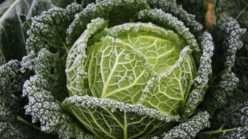 5 Ways to Extend your Growing Season