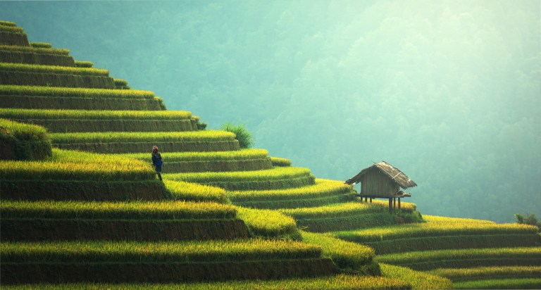 man climbing rice terraces