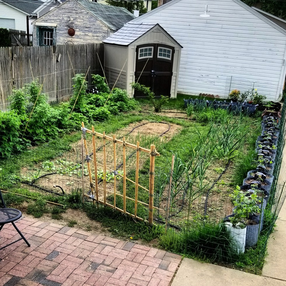 Vegetable garden with bamboo fence, raspberry bushes, Root Pouch fabric pots lining the fence, and potting shed