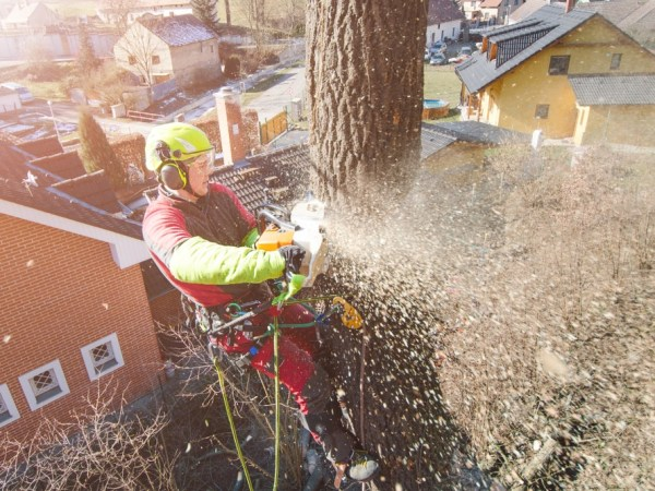 Gardening career as a tree surgeon