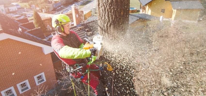 Gardening career as a tree surgeon