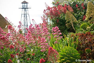 guard tower and Alcatraz gardens