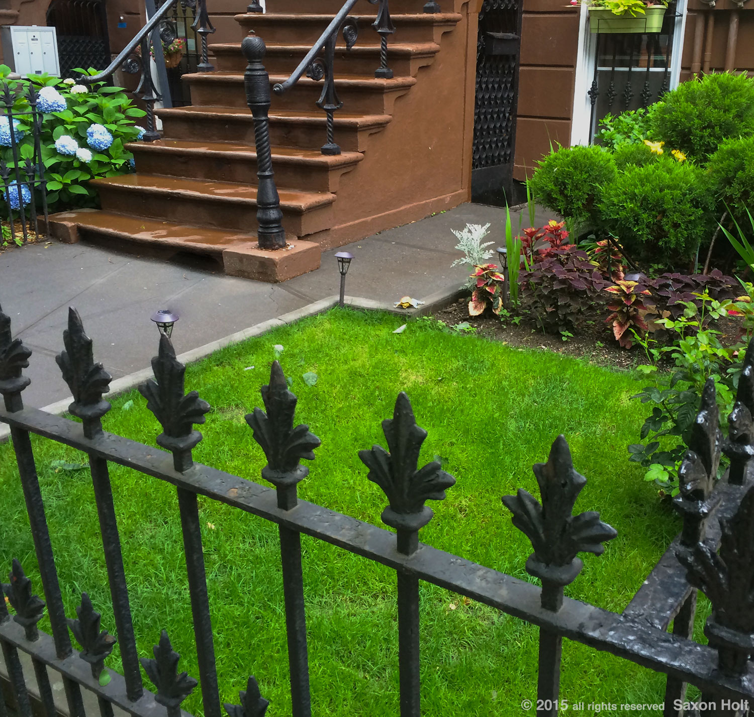 tiny lawn - Greenest block in Brooklyn