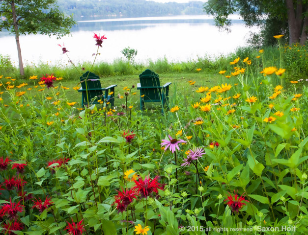 Connecticut meadow garden with native wildflowers; Larry Weiner Design