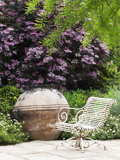 Sambucus nigra Cistus corbariensis Credit: Les jardins Agapanthe 76 France