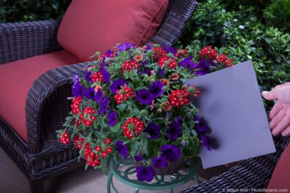 Gray card potted flowers on patio plant stand;