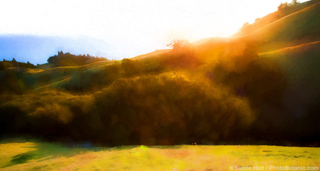 Sunset light skimming across hills, Mount Tamaplais State Park California