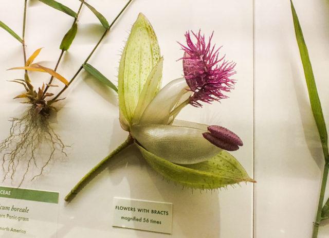 Glass Flowers Exhibit Harvard Museum of Natural History