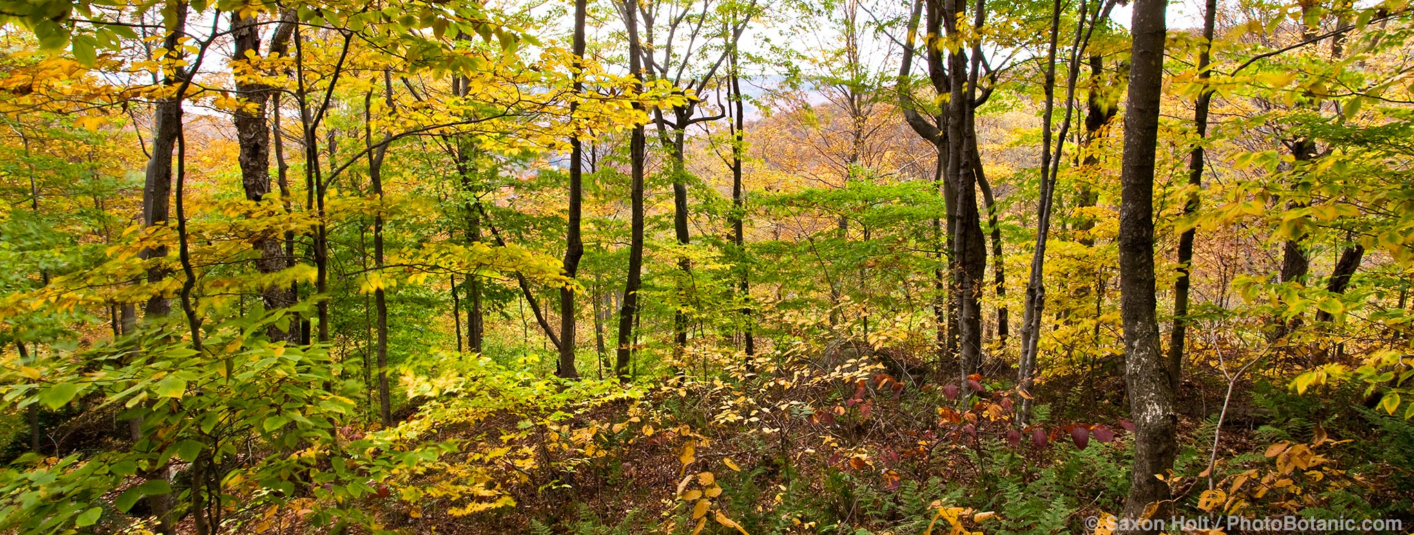 New England woodland in autumn