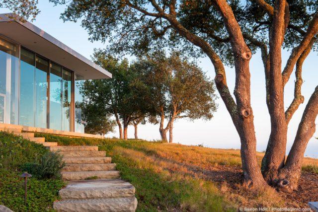 Oak trees (Quercus agrifolia) in California native plant garden around modern home on hill in evening light, Santa Barbara,