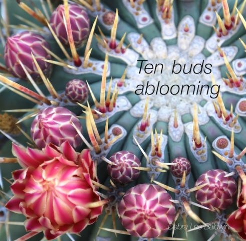 10-buds-ablooming_a_2_r