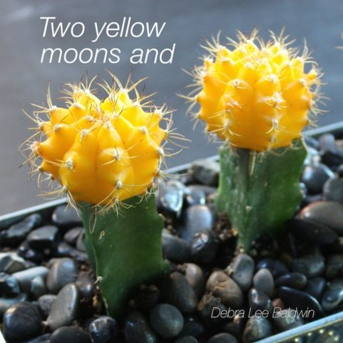 2-yellow-moons_a_2_r