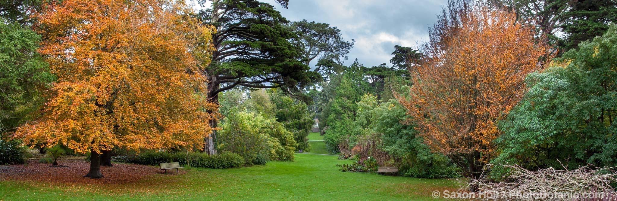 Panorama axial view of San Francisco Botanical Garden in autumn from Zellerbach Perennial Garden toward Fountain Plaza