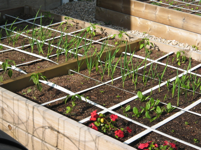 Square Foot Gardening is Anything but Square (3/5)