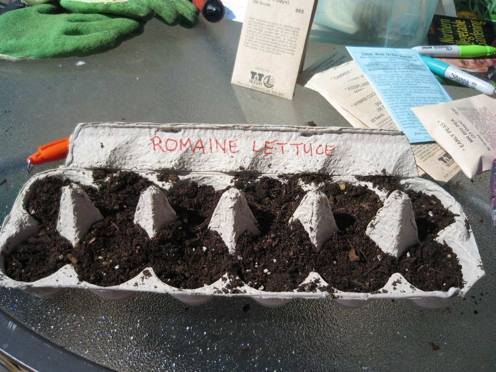 Planting in Egg Cartons (3/3)