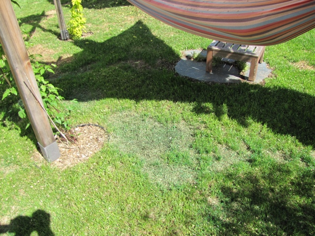 Product Review: LawnLift Grass Paint (4/6)