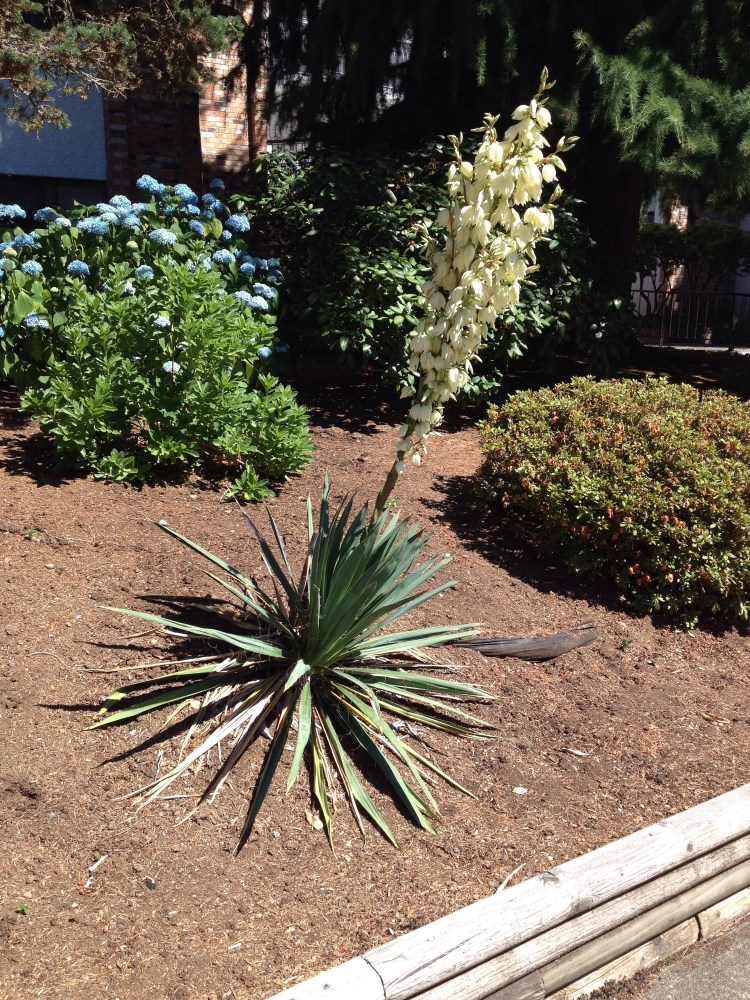 Not so Yucca (3/3)