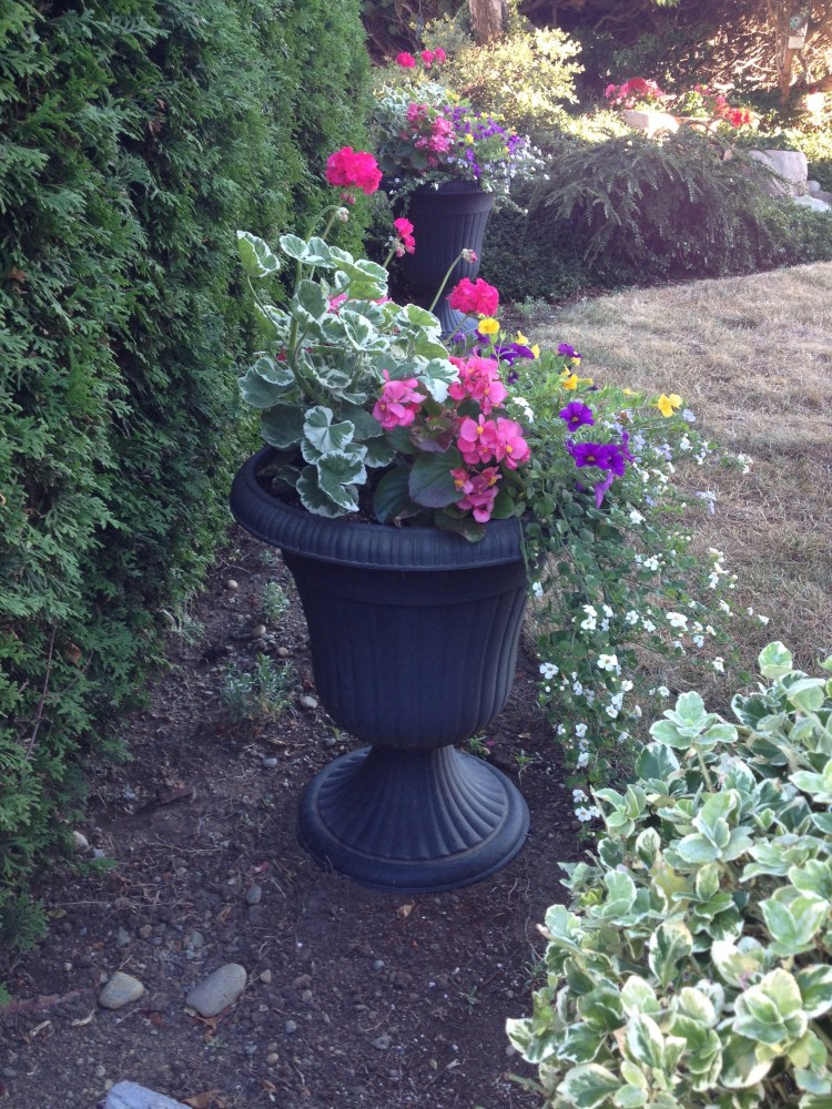 Thriller, Fillers and Spillers: The Formula for a Fabulous Planter (1/6)