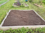 Brassica bed