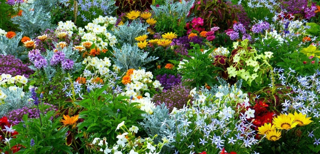 What Is A Flower Garden And How To Grow Flowers At Home Gardening Magazine