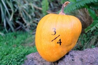 When a whole pumpkin just won't do.