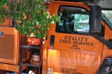 Qualified tree service
