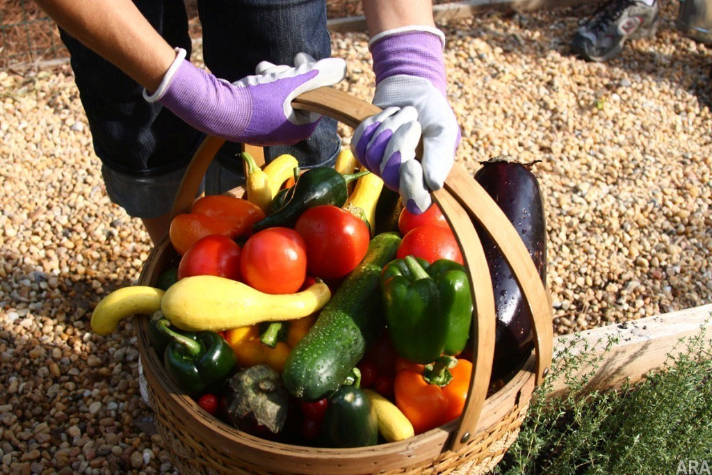 Growing Your Own Vegetable Garden