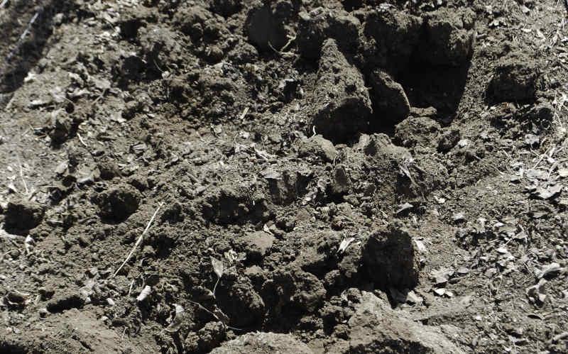 corona disc cultivator dirt