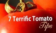 Seven Terrific Tomato Tips