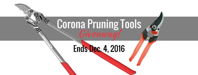 corona-giveaway-featured