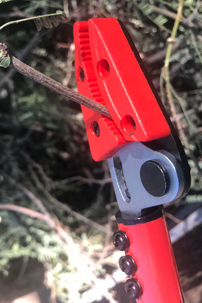Corona Long Reach Pruner cut on the correct side of branch