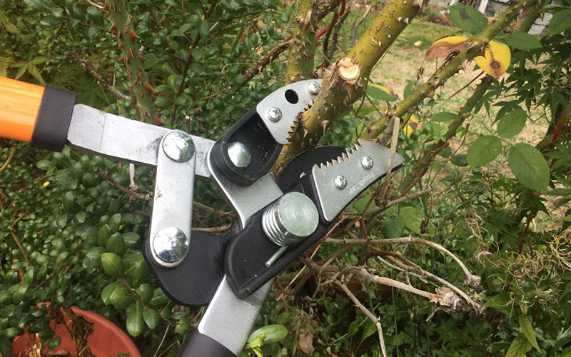 Fiskars Cut and Grab Loppers with the Rose bush