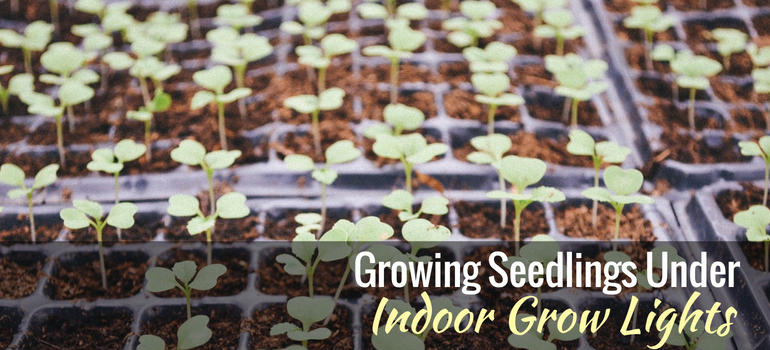 How To Grow Seedlings Under Indoor Grow Lights Gardening