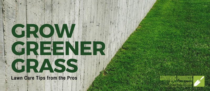 grow greener grass lawn tips