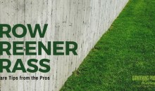 Grow Greener Grass: Lawn Care Tips from the Pros