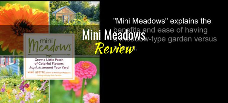 Mini-Meadows-featured-image