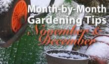 Gardening Tips for November & December
