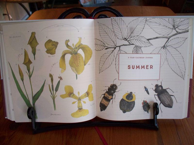 Naturalists Notebook Season Calendar Illustrations