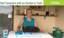 How to Grow Tomatoes in a Bag of Potting Soil
