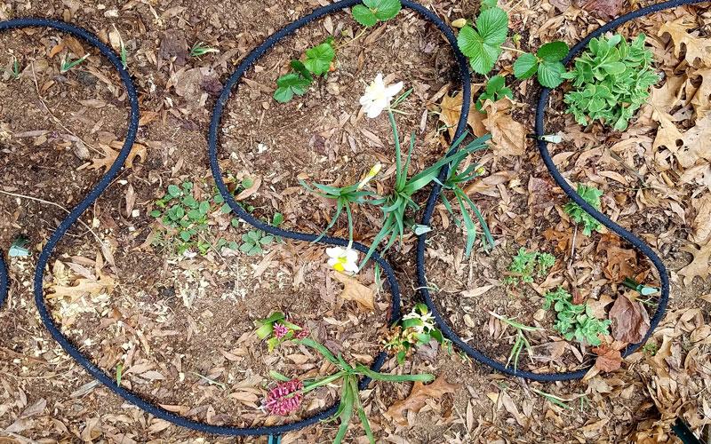 Snip-n-drip in flower bed