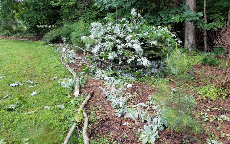 Photo-7-In-no-time-I-had-a-tidy-pile-of-branches.-By-the-time-I-finished,-I-had-six-piles