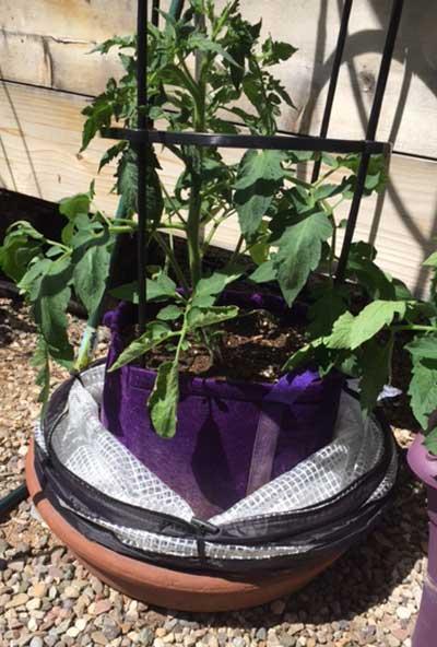 pop-up accelerator and grow bag