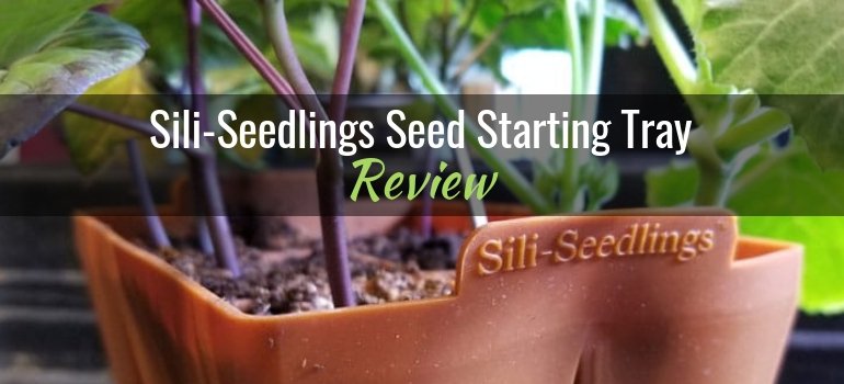 Sili-Seedlings seed starting tray review