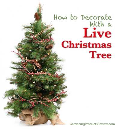 live christmas tree how to december 14 2014 monica hemingway - Live Mini Christmas Tree