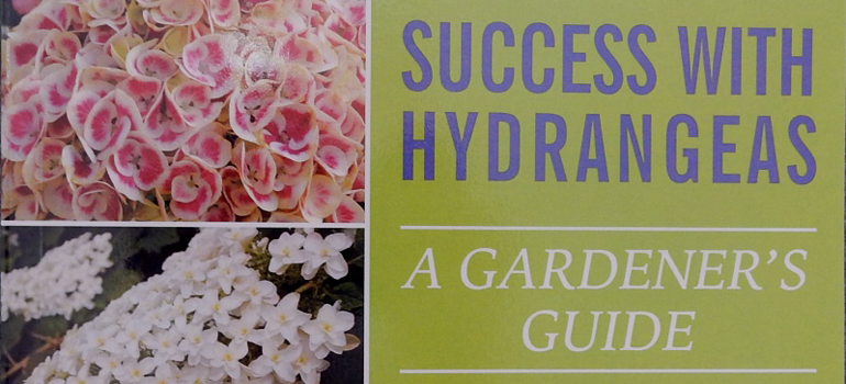Success-With-Hydrangeas-featured-image