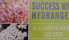 'Success With Hydrangeas, A Gardeners Guide' by Lorraine Ballato: Book Review