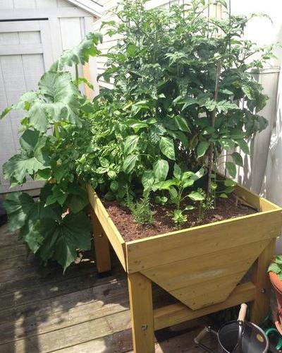 VegTrug Raised Planter