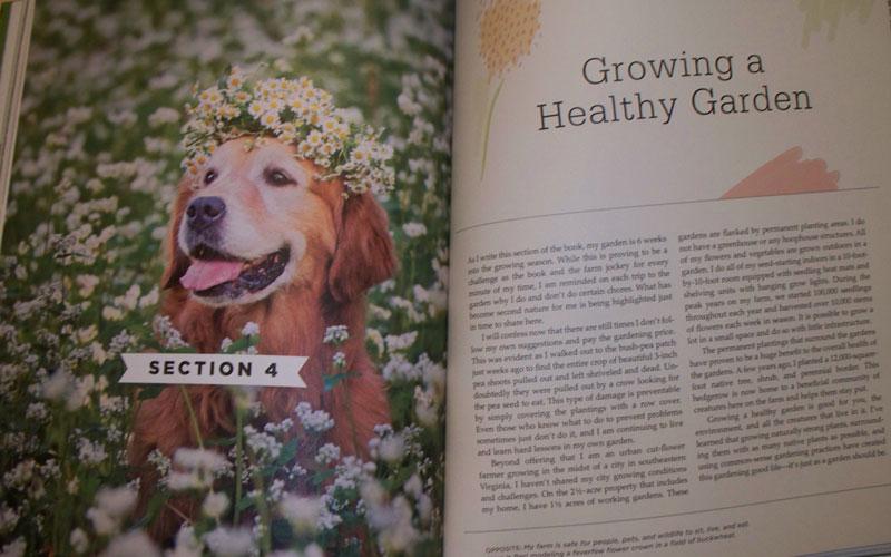 Vegetable Love Flowers Beri the Dog